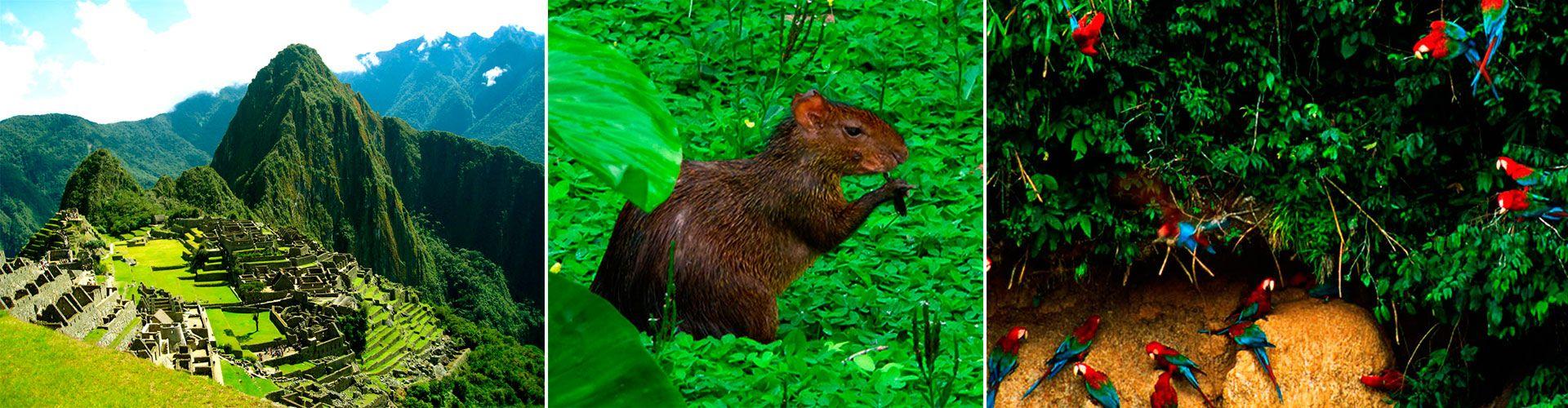 Salkantay Trek Tambopata Reserve 9D/8N