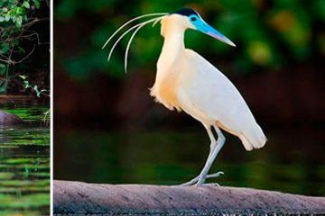 Tambopata Reserve 3D/2N